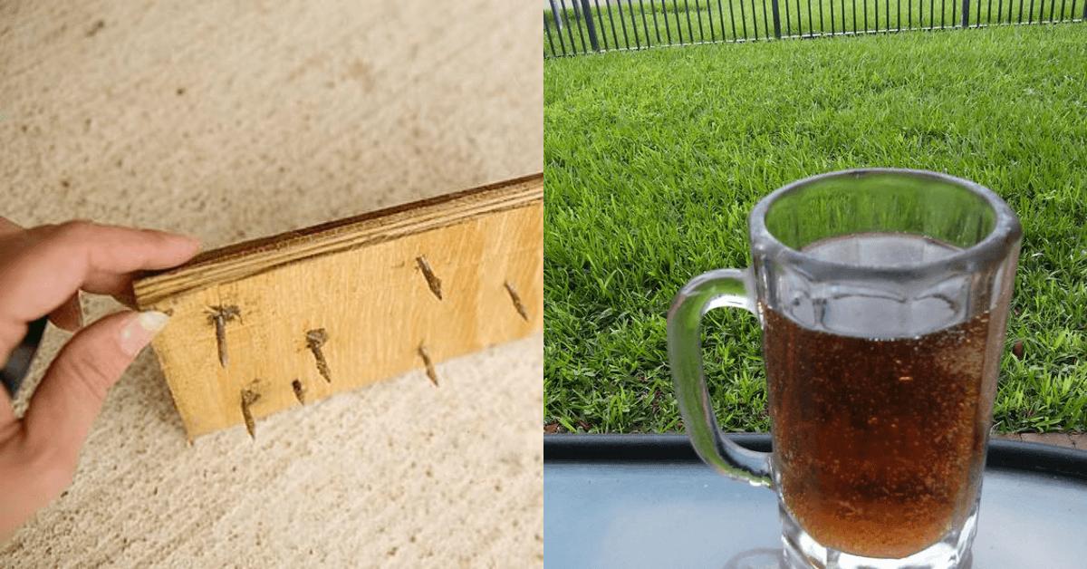 12 Fehler, die deinen Rasen ruinieren.