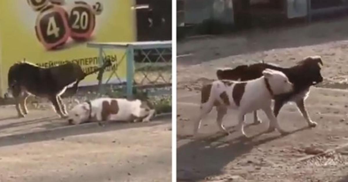 Gutherziger streunender Hund sieht einen Welpen gefesselt   dann schafft er es zu befreien