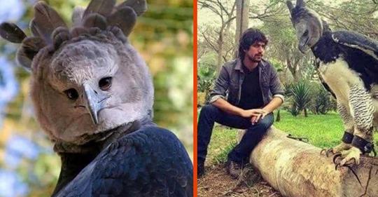 Riesiger Adler wird für Mensch im Kostüm gehalten