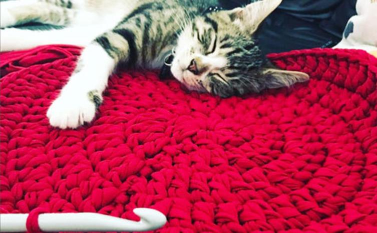 So häkelst du ein kuscheliges Katzenkörbchen in 20 Minuten