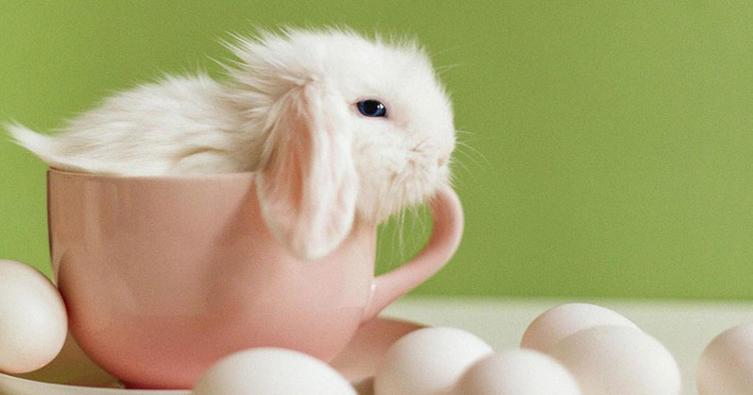 Frohe Ostern! Wir zeigen euch die schönsten Osterhasen-Videos