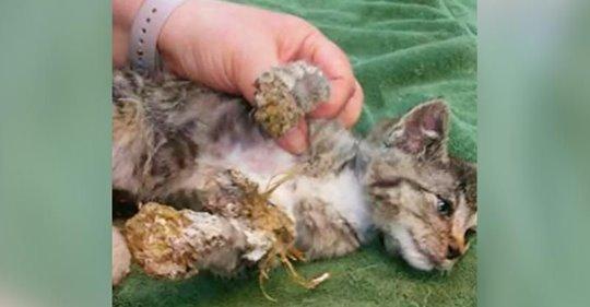 Armes 8 Wochen altes Kätzchen, dessen Kopf und Pfoten mit gehärtetem Schaumstoff bedeckt waren, in Müll gefunden