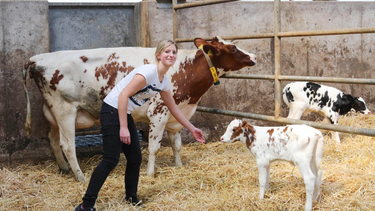 Bäuerin Anja kämpft: 700 Tiere sollen wegen Herpes Virus getötet werden