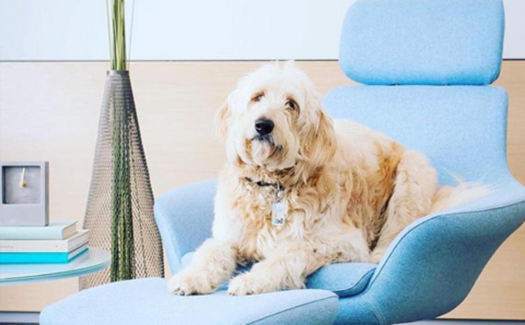 Bessere Laune mit Büro Hund? So positiv wirkt sich eine Fellnase am Arbeitsplatz aus!