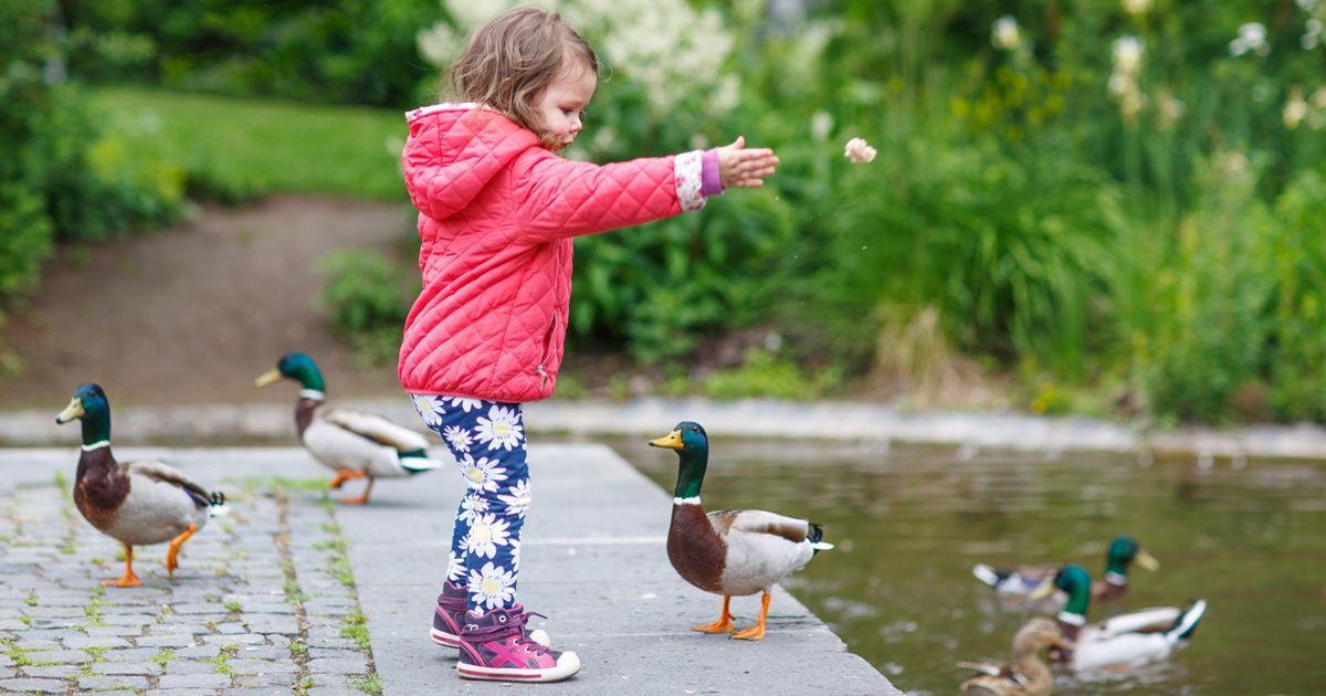 Nicht nur für die Tiere gefährlich - Hört auf, Enten zu füttern!
