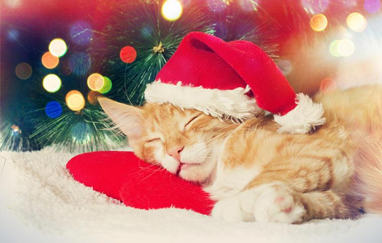Die perfekten Geschenke für die Katzen-Gesundheit