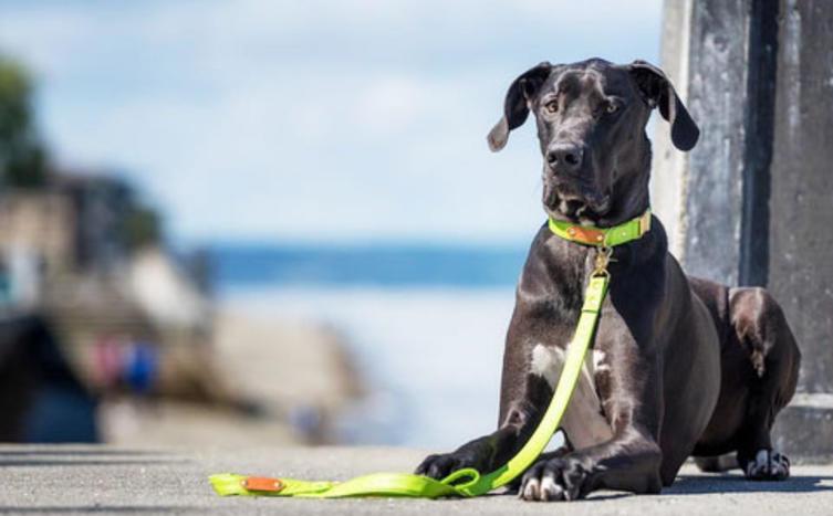 Eine Hundeleine oder Halsband selbermachen – So geht's: