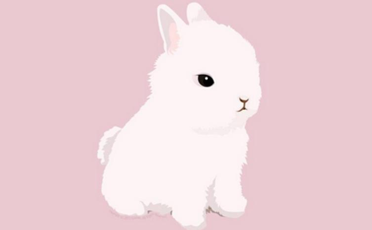 Die Erstausstattung für Kaninchen!