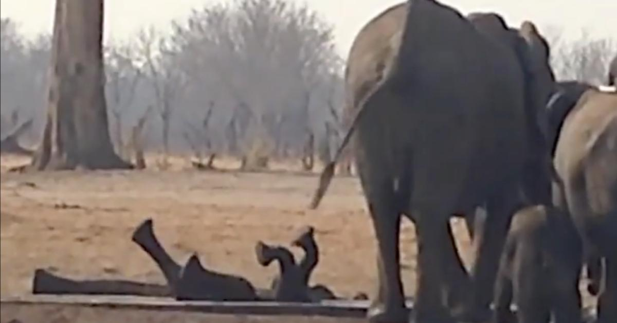 Fremder Elefant rettet Baby aus Wasserkanal.