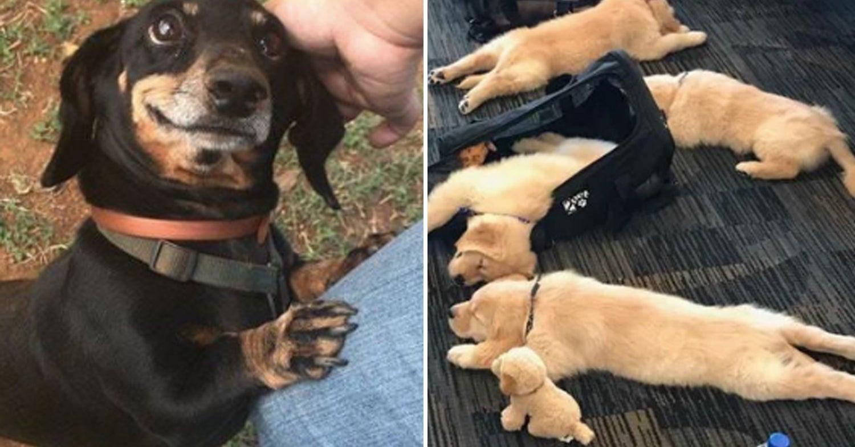 20 Dinge, die Hundeliebhaber ekelhaft liebenswürdig finden