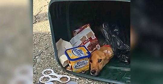 Frau entsorgt Hund in Mülleimer, um zu ihrem Freund in einen andere Staat zu ziehen