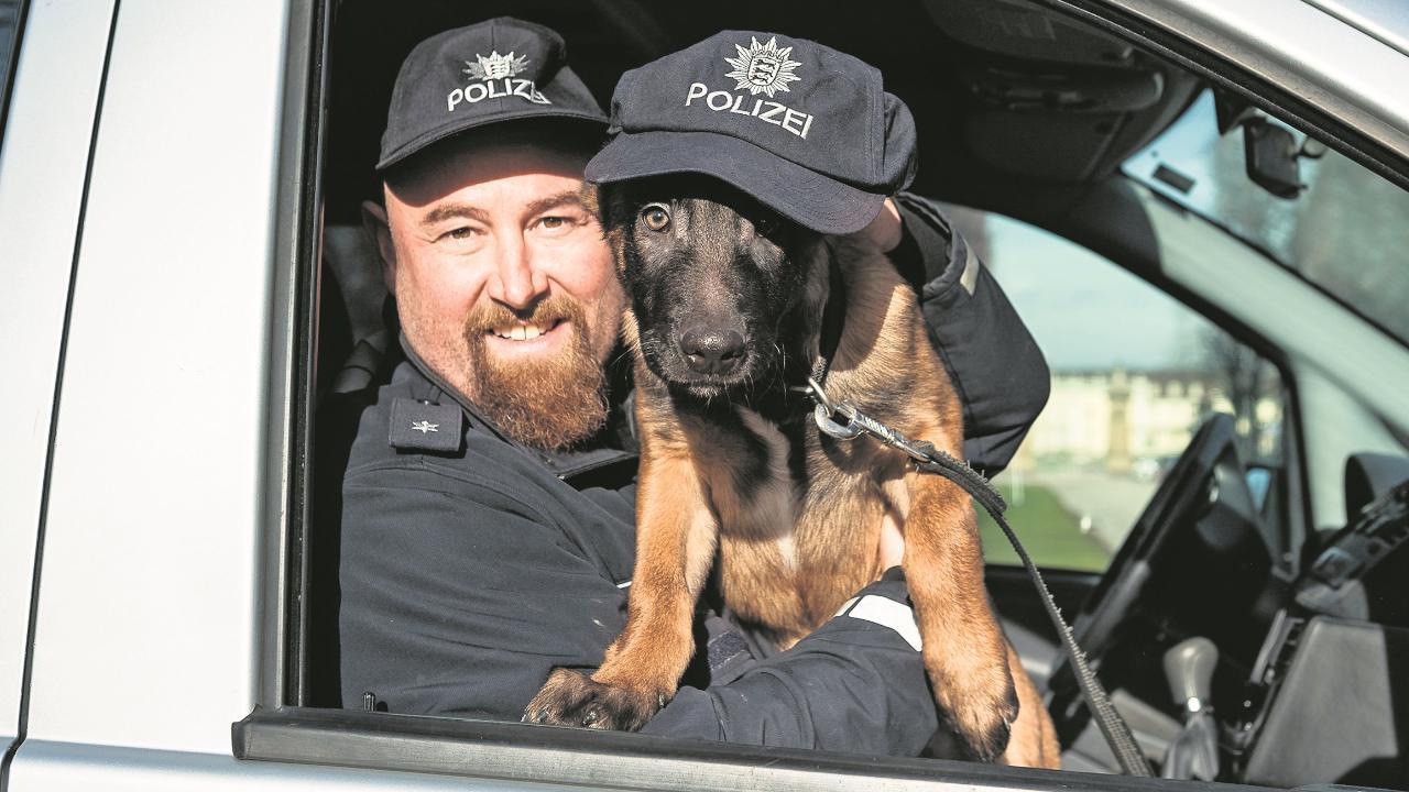 Ludwigsburg: Welpe wird Spürhund: Bronco schafft jetzt bei der Polizei
