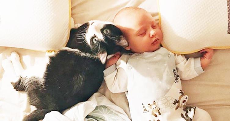 AUFGEPASST: So bringt ihr Katze und Baby am besten zusammen!