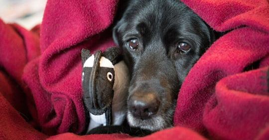 Labrador schon zum 2. Mal ausgesetzt: Doch dieses Detail macht sie richtig wütend!