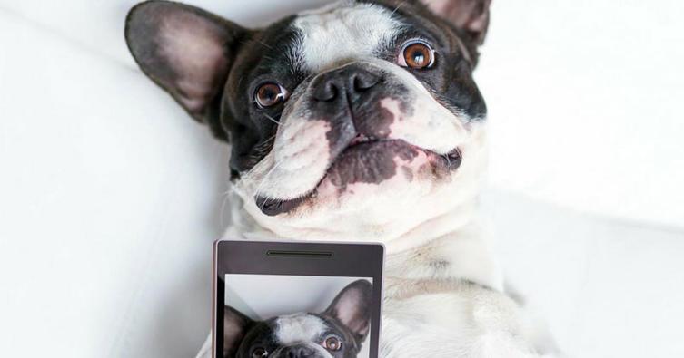 Das sind die besten Apps für Hundebesitzer