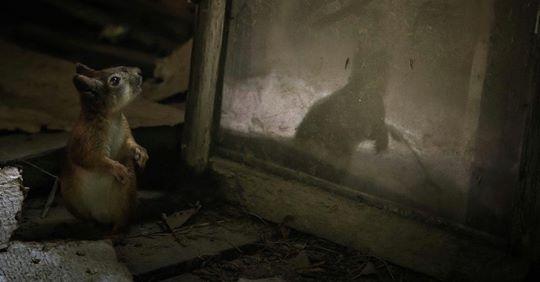 Wenn wilde Tiere verlassene Häuser beziehen