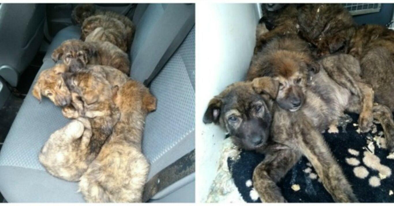 Er findet Schäferhund Welpen in seiner Garage. Als er sich nähert, wählt er sofort den Notruf!