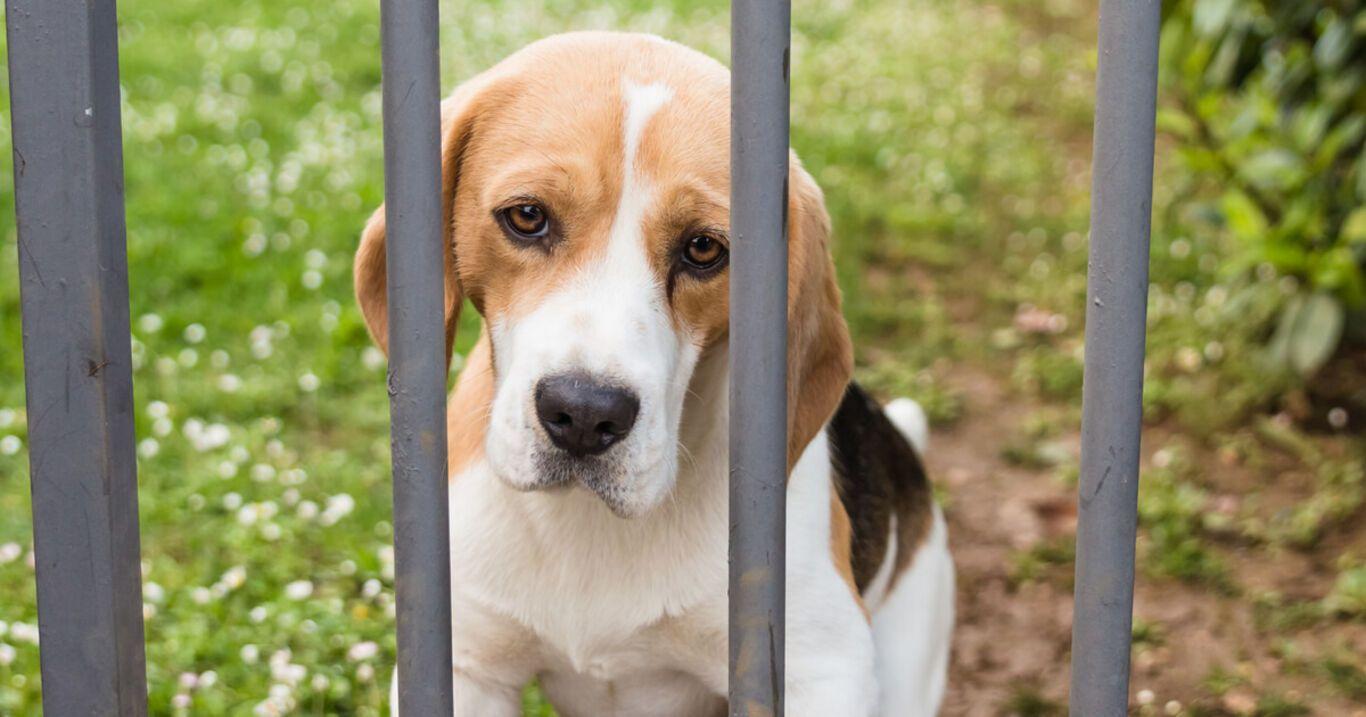 Todkranke Frau: Ihre einzige Hoffnung ist ihr Hund, doch er darf nicht mit ins Flugzeug