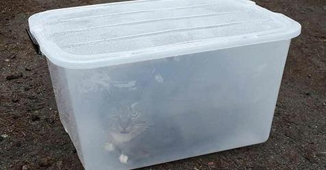 Neustrelitz: Katze wird in Plastikbox ohne Luftlöcher mitten im Wald gefunden – Spaziergänger entdecken sie.