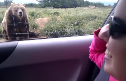 Eine Frau winkt einem Bären zu und erwartet nicht, dass er reagiert