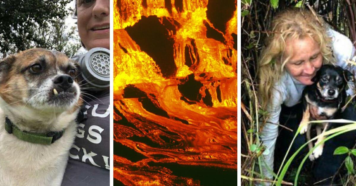 Eingesperrt zwischen einem Zaun – und tödlicher Lava: Vulkan treibt 2 Hunde in die Enge