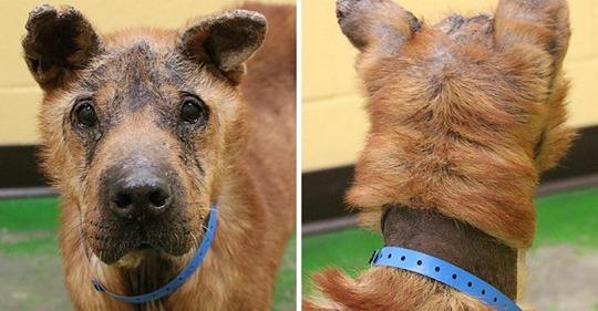Nach 8 Jahren in der Hölle: Traurigster Hund des Tierheims erlebt ein Weihnachtswunder