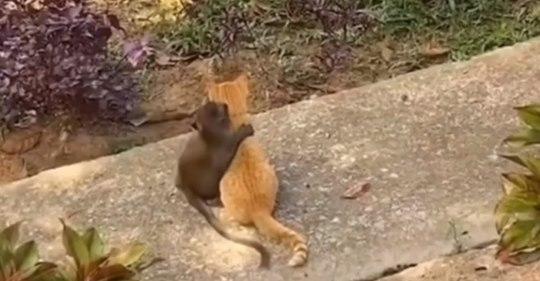 Affe und Kätzchen treffen aufeinander und zeigen uns, dass Liebe keine Grenzen kennt