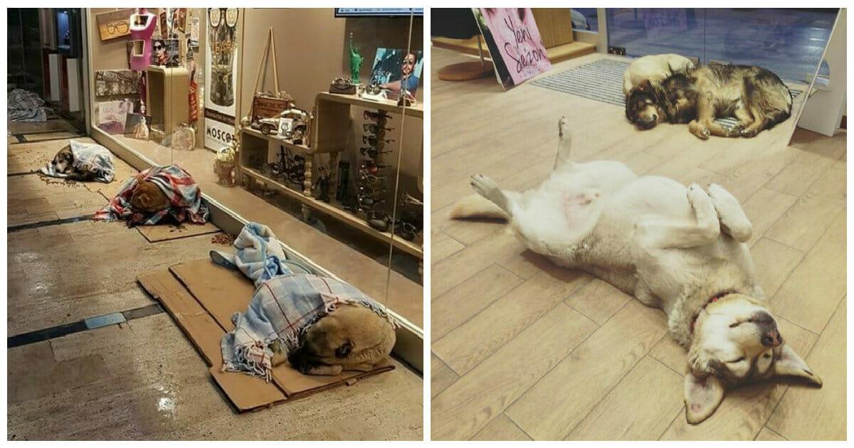 Shopping Center in Istanbul lässt Straßenhund während des kalten Winters bei sich schlafen