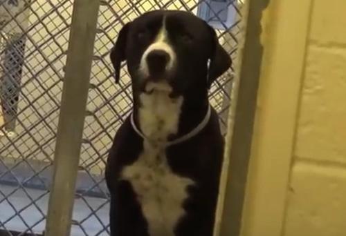 Hund aus kalifornischem Tierheim springt vor Aufregung, als er merkt, dass er adoptiert wurde