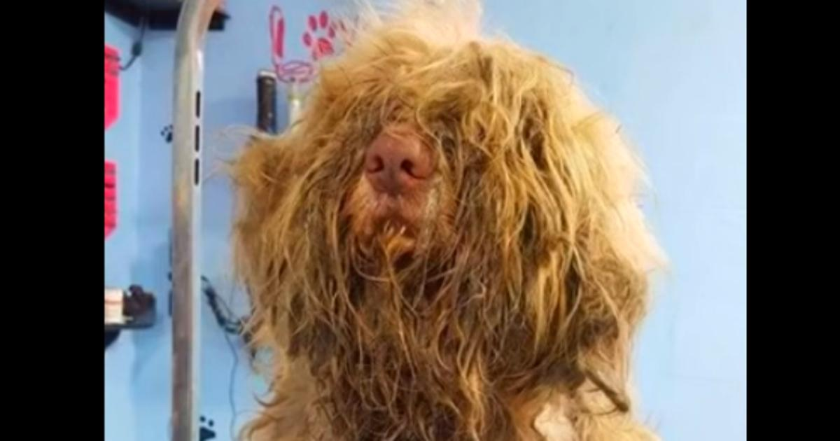 Mitfühlende Hundefrisörin öffnet ihren Salon um Mitternacht, um einem Streuner zu helfen