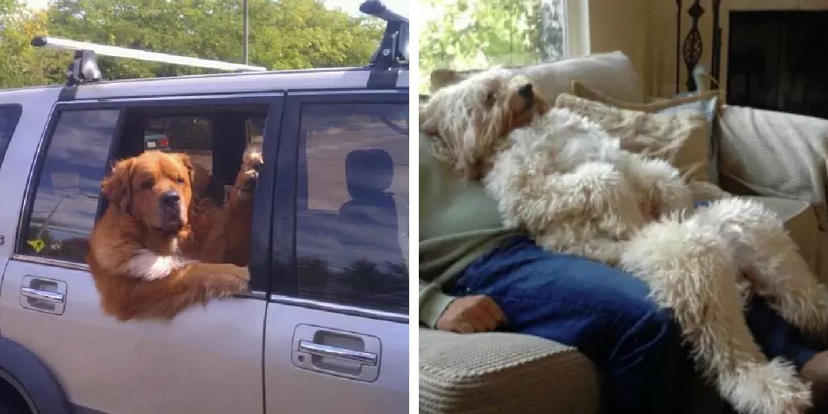 13 Hunde, die verdächtig wie Menschen in Hunde Kostümen aussehen