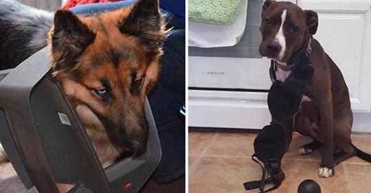 25 Hunde, die absolut, definitiv 100%ig nichts gemacht haben