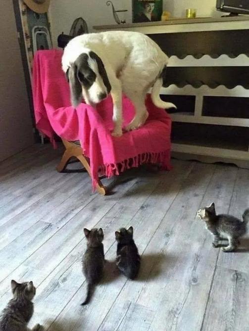 12 Katzen, die gern scheiße zu Hunde sind und überhaupt kein schlechtes Gewissen haben