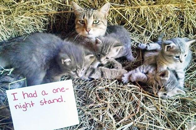 16 Katzen, die eiskalt bloßgestellt werden