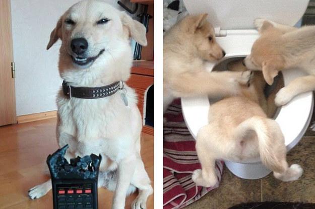 17 Hunde, die ihre Besitzer beinahe um den Verstand gebracht haben