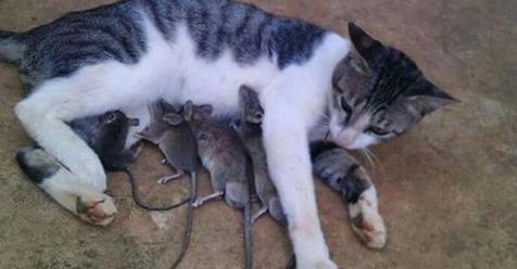 16 stolze Katzen-Mamas