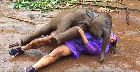Frau wird in Thailand von einem Baby Elefanten geknuddelt.