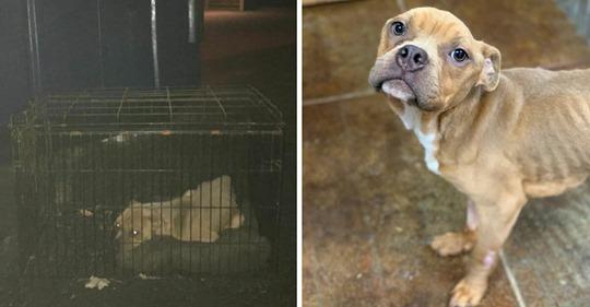 Frau steckt eigenen Hund in Käfig und wirft ihn in Müllcontainer – Tierquälerin wird kurz darauf verhaftet