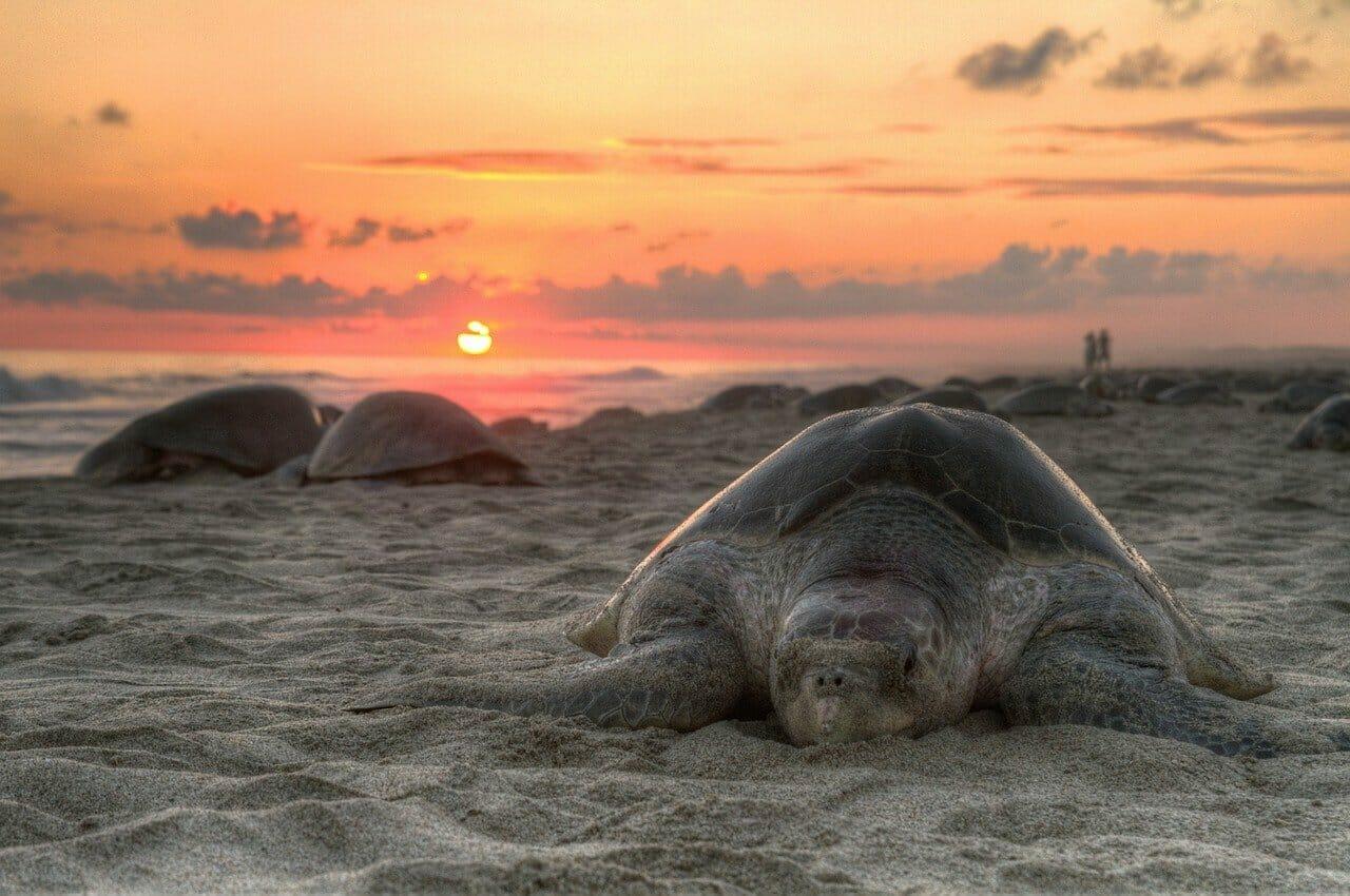 Mann kauft alle Meeresschildkröten von einem Lebensmittelmarkt – entlässt sie dann alle in die Freiheit