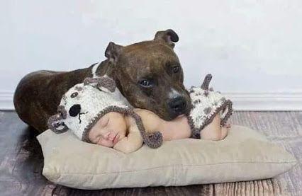 50-Kilo-Pitbull schleicht ins Kinderzimmer. Plötzlich wird das kleine Mädchen wach!