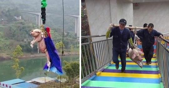 Um neue Attraktion anzupreisen: Freizeitpark-Mitarbeiter lassen Schwein an Seil 70 Meter in die Tiefe fallen