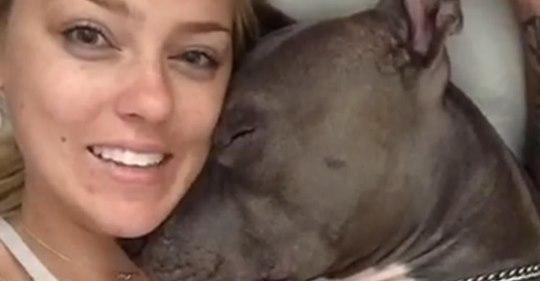 Eine Hundebesitzerin wird von ihrem Pitbull mit Küssen überschüttet, als er aufwacht