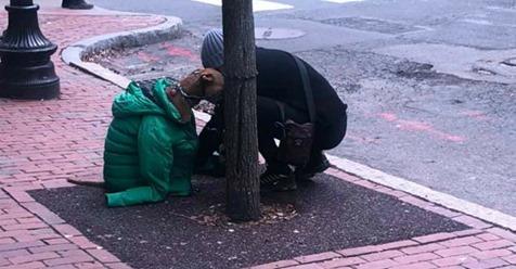 Ihr Hund darf nicht mit zur Post: Die Entscheidung, die sie trifft, lässt alle sprachlos zurück