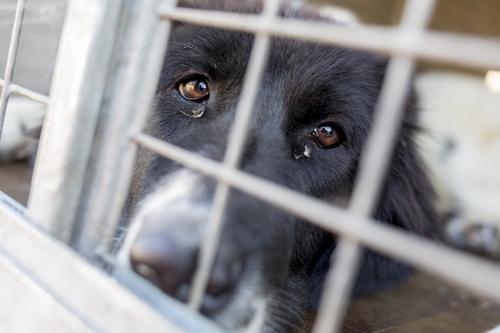 Gutherzige Frau rettete einen Hund, der in Fluss geworfen worden war und einen Stein an seiner Leine befestigt hatte