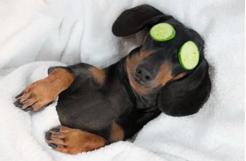 16 spannende Fakten über Hunde, von denen du vielleicht noch nichts gehört hast