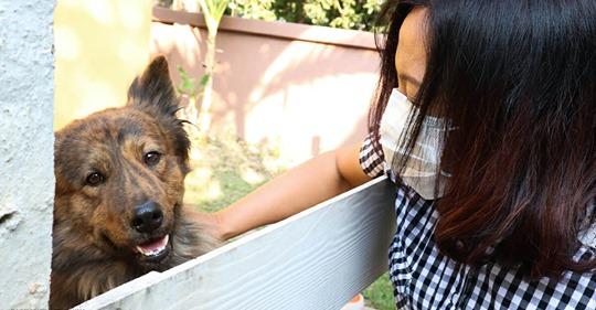 Bürgerwehr erschlägt Hunde auf offener Straße oder wirft sie von Dächern – wegen des Coronavirus