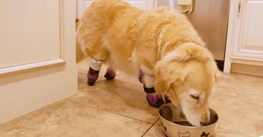 Mutiger Hund, der im Müllcontainer gefunden wird, findet ein neues Zuhause mit viel Liebe