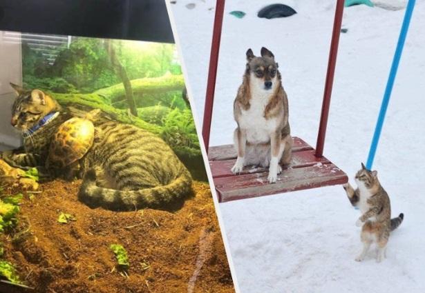15 unerwartete Tierfreundschaften, die dich hoffentlich etwas aufheitern