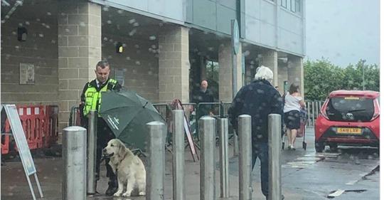 Security Mann schützt Hund vor Regen – die Szene rührt tausende Twitter User