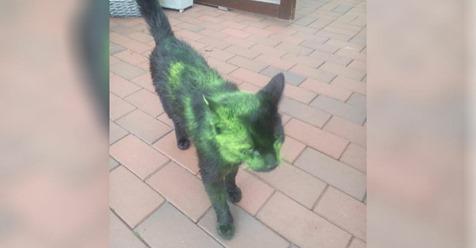 Katzen mit giftiger Farbe besprüht: Deutsche Gemeinde in Angst vor Tierhasser